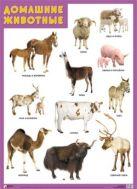 ПЛ Домашние животные