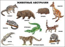 - Животные Австралии (плакат) обложка книги