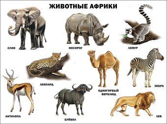 Животные Африки (плакат)
