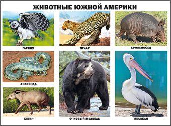 Животные Южной Америки (плакат)