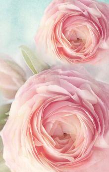 Блокнот. Розы