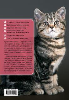Обложка сзади Британские кошки Анастасия Красичкова