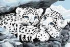 Живопись на холсте. Размер 30*40 см.. Снежные леопарды (049-CE )