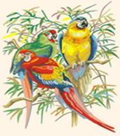 Живопись на холсте. Размер 30*40 см.. Тропические попугаи (245-CE )