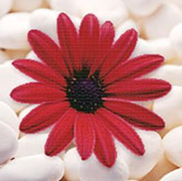 Наборы для вышивания в формате 3D. Алый цветок (7005-3D )
