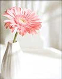 - Наборы для вышивания в формате 3D. Розовая гербера (7010-3D ) обложка книги