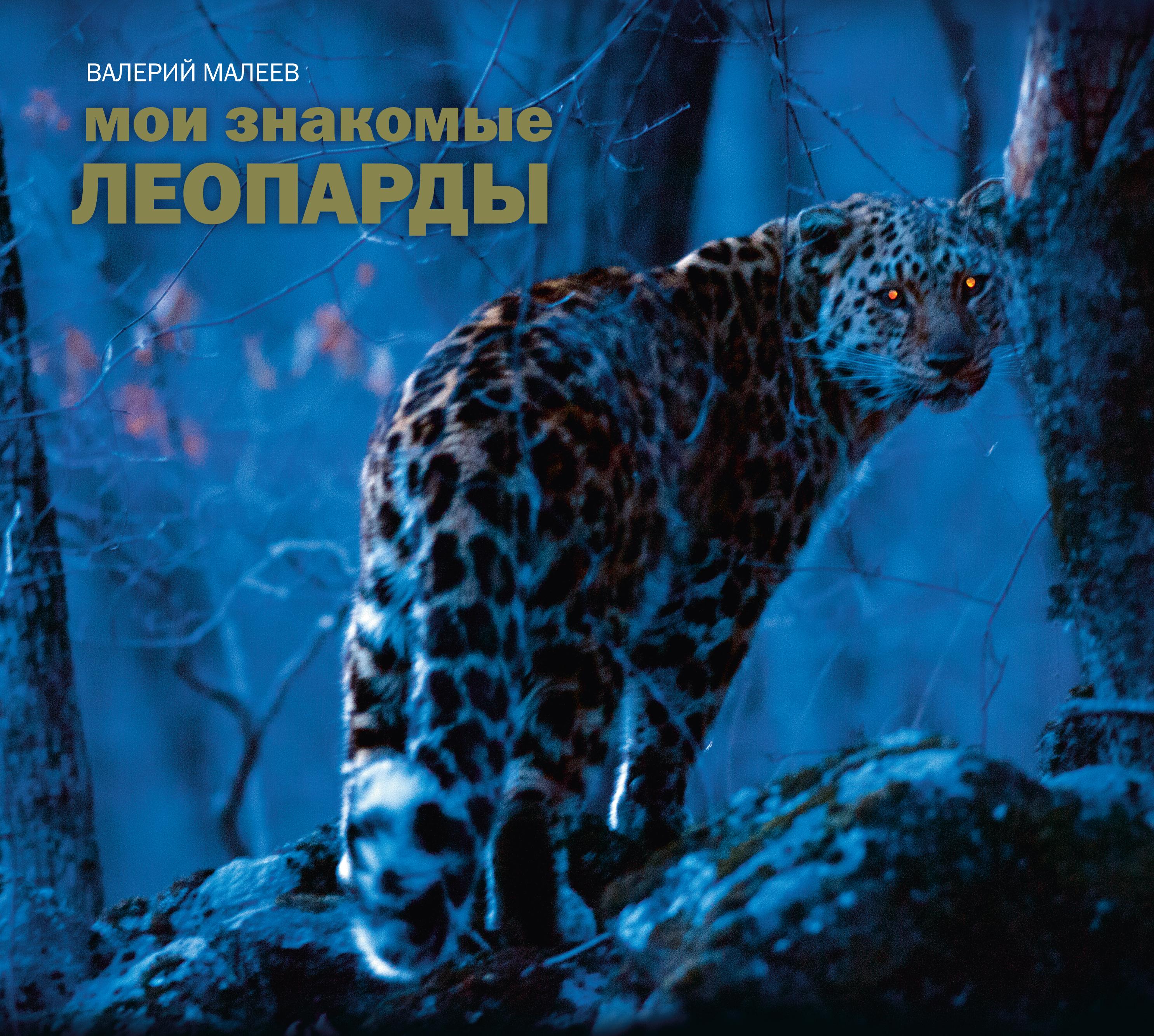 Мои знакомые леопарды ( Валерий Малеев  )