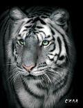 Блокнот настоящего хищника (Белый тигр). А5 от ЭКСМО
