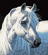 Живопись на холсте 30*40 см. Белая лошадь (230-CE)