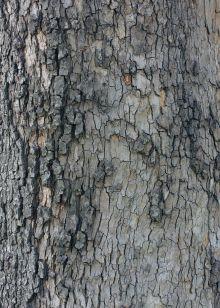 Обложка Блокнот для записей Лесной