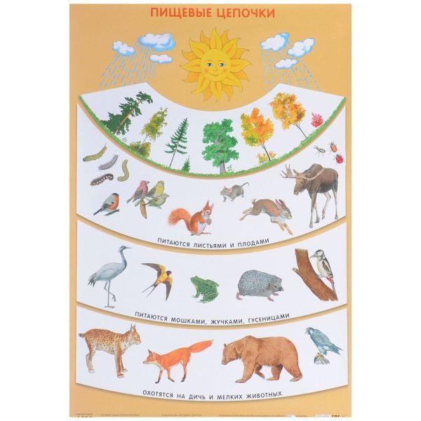 Пищевые цепочки (Плакаты) Николаева С. Н