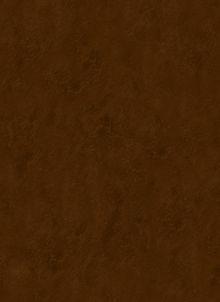 Обложка сзади Библия. Книги Священного Писания Ветхого и Нового Завета, с параллельными местами, с цветными иллюстрациями, синодальный перевод, в кожаном переплете (с грифом РПЦ)