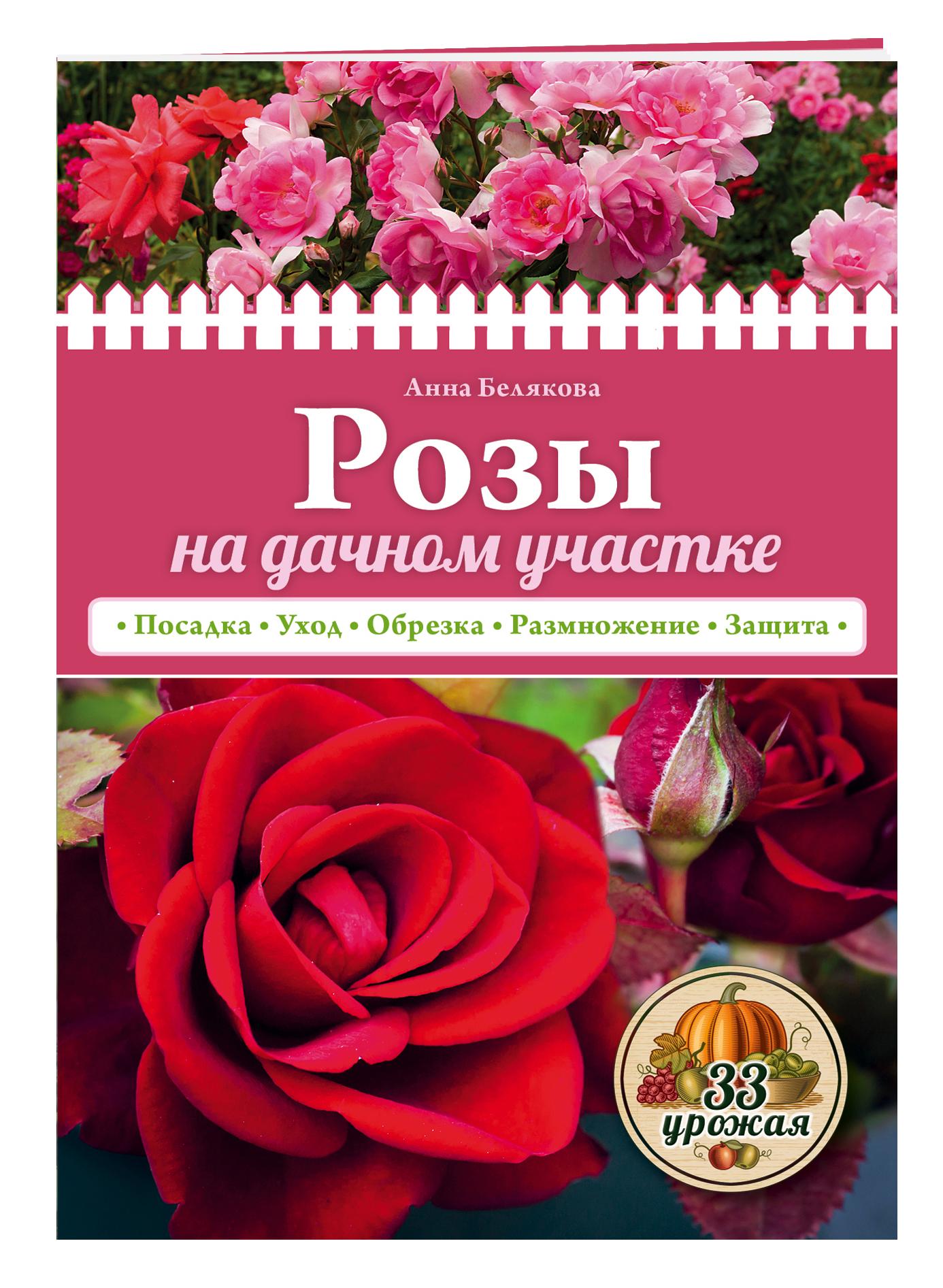 Розы на дачном участке (нов.оф.) ( Белякова А.В.  )
