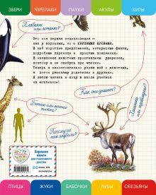 Обложка сзади Все животные с крупными буквами Елена Ананьева