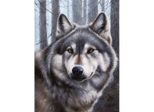 - Живопись на холсте 30*40 см. Волк (090-AS) обложка книги
