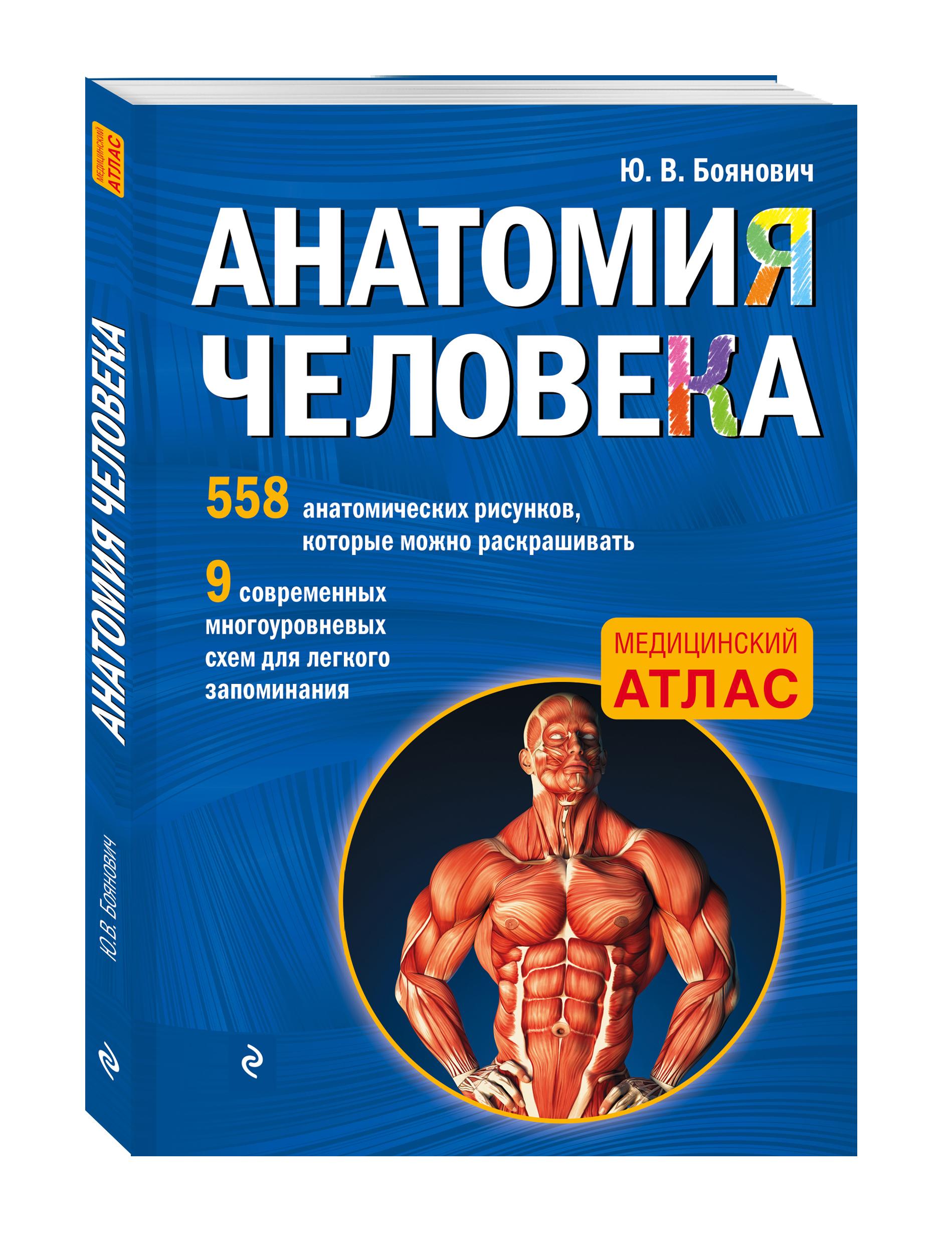 Анатомия человека со страницами для раскрашивания ( Боянович Ю.В.  )