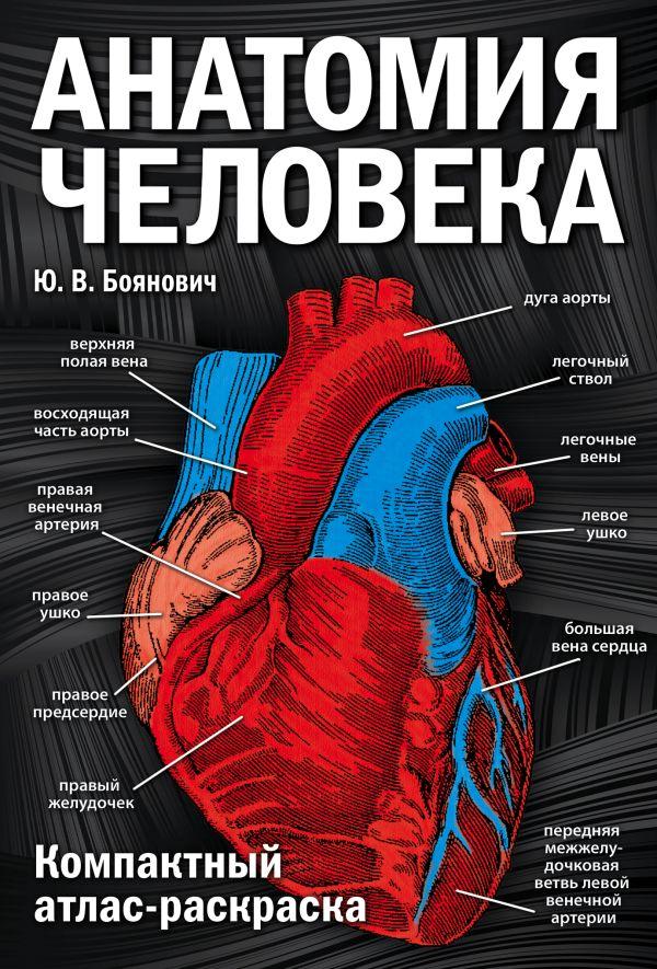 Книга Анатомия человека компактный атлас раскраска Юрий ...