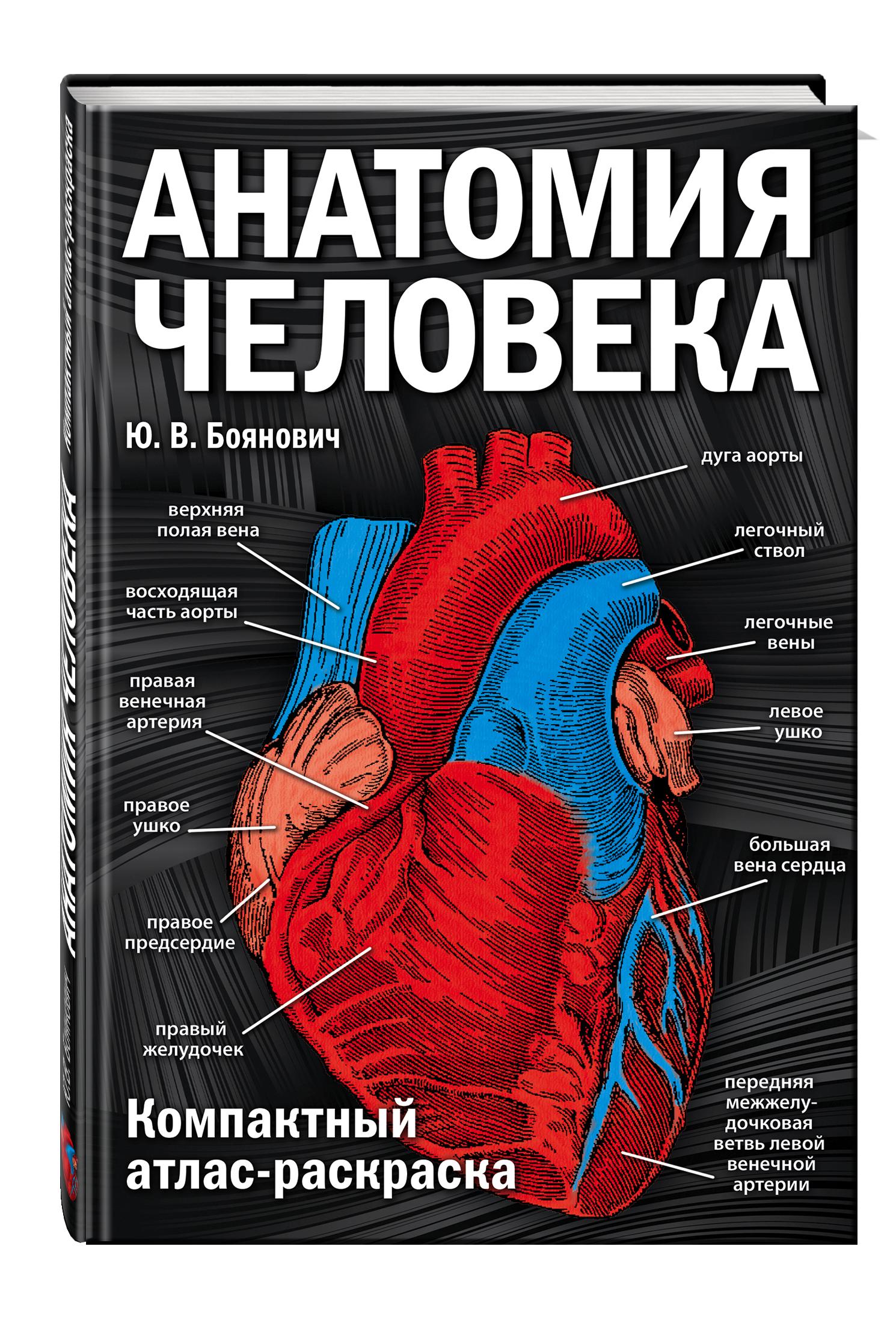 Боянович Ю.В. Анатомия человека: компактный атлас-раскраска шилкин в филимонов в анатомия по пирогову атлас анатомии человека том 1 верхняя конечность нижняя конечность cd