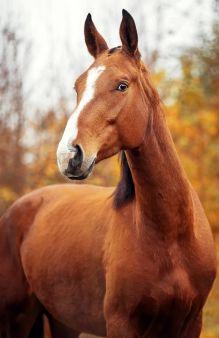 Удивленная лошадь (А5)