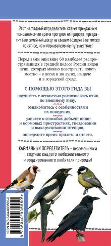 Обложка сзади Птицы России. Наглядный карманный определитель Ксения Митителло