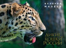 Обложка Дикие кошки России: иллюстрированный авторский фотоальбом Валерий Малеев
