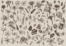 Обложка сзади Скетчбук. Винтажный гербарий (формат А5, 128 стр, открытый корешок, бумага слоновая кость)