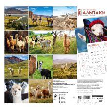 Обложка сзади Эти забавные альпаки. Календарь настенный на 16 месяцев на 2021 год (300х300 мм)
