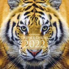 Тигры в снегах. Календарь настенный на 2022 год (300х300 мм)